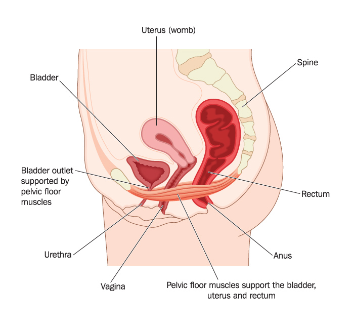 Perineal fig 3